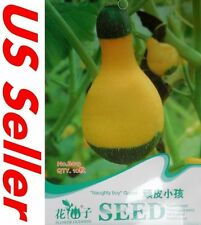 10 Seeds Naughty Boy Gourd E132, Garden Vegetable Seeds