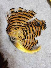 Yellow Golden Pheasant Cock Cape Crest Tippet Skin Pelt Feathers T18