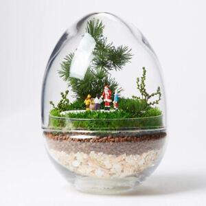 Egg shape jar 28 cm terrarium Handmade clear Glass planter