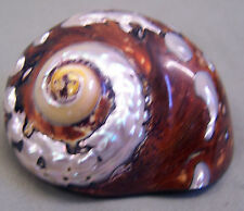 Beautiful Mother Of Pear Sea Shell Spiral Art Deco 3.5' x 2""