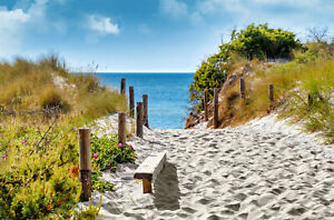 VLIES Fototapete-DÜNEN-(2741V)-Strand Meer Beach Ozean Natur Blumen Palmen Bild