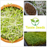 Alfalfa Seeds 3gms - 100gms - Organic Microgreens Sprouts Sprouting