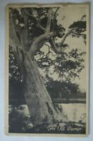 An Old Warrior Australian Collectable Antiquarian Vintage Postcard