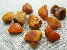 Lot of 10 Natural Rare Drops Genuine Baltic Amber Stones Nuggets 40.50 grams