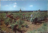 37 Vouvray les Vins - Scène de Vendanges