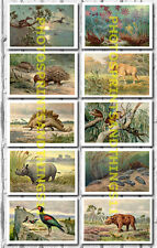 Heinrich Harder Dinosaur Prehistoric Paintings - Collectable Postcard Set # 6