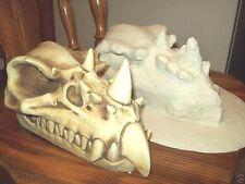 Large Dragon Skull / Latex mold for concrete/plaster
