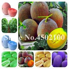 30 Pcs Seeds Japanese Honey Dew Melon Bonsai Muskmelon Fruit Green Garden 2019 N