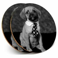 2 x Coasters bw - Funny Puggle Puppy Dog Pup Cute  #43645