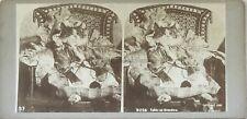 Chat déguisé Tabby as Grandma Photo Gravers Stereo Vintage Citrate 1896