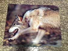16x20 Wolf poster Grey Wolves Photo Running USA graphics Animals