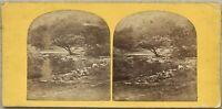 Paesaggio Ruscello Montagne Foto Stereo Stereoview Vintage Albumina