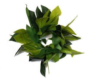 Hawaiian Party Luau Elastic All Green Leaf Maile King Wrist Band Wristlets