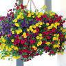EB_ 100Pcs Spiderflower Seeds DIY Home Garden Plant Potted Bonsai Decoration Per
