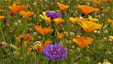 =AKTION =Schmetterlings Wiese bunte Mischung 1 Portion über 500 Samen