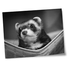 "8x10"" Prints(No frames) - Bw - Ferret Hammock Pet Rodent Animal #37246"