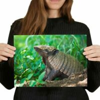 A4 - Cute Baby Armadillo Animal Poster 29.7X21cm280gsm #3053