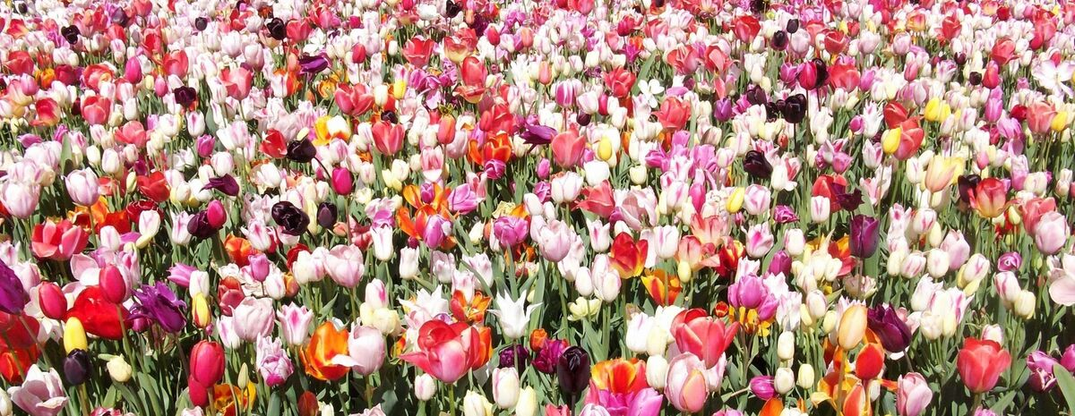 Classic Flower Bulbs and Plants