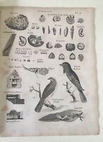 Antique Print -1806 Original Steel Engraving -  Fossil