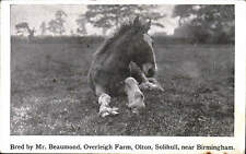 Olton, Solihull near Birmingham. Horse Bred by Mr Beaumond, Overleigh Farm.