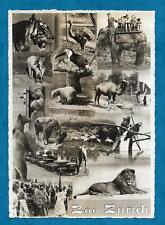 1930'S RP MONTAGE VIEW POSTCARD ZURICH ZOO, SWITZERLAND
