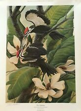 "John A. Ruthven ""The Challenge"" Pileated Woodpecker with Large Leaf Magnolia"