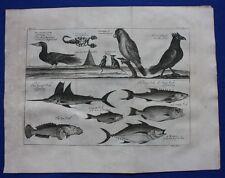 Original antique print WEST AFRICA BIRDS & FISH, SCORPION, SEA TOAD, Kip,1746