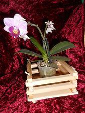 Übertopf für Orchideen Holz handgefertigt