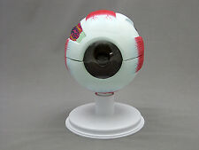 6 Part Giant Eye Model Anatomical Model, New