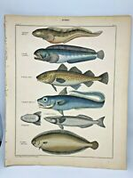 Antique large hand-colored print 1843.Oken's Naturgeschichte Plate 48 Fish
