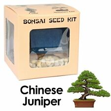 Chinese Juniper Bonsai Seed Complete Kit Woody Grow Chinese Juniper Bonsai Tree