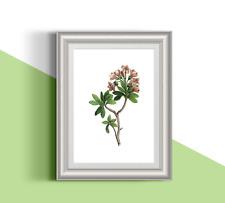 Botanical pink flower 06 illustration A4 print. Nature.