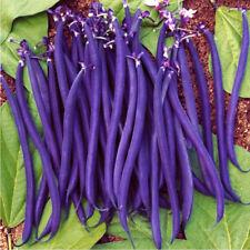 20 Seeds Purple Phaseolus Bean Bonsai Plant Tree House Herb Garden Flower Decor