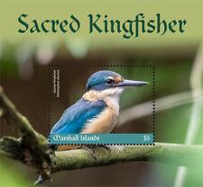 Marshall Islands 2019 fauna Sacred Kingfisher  I201901