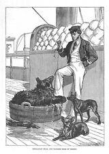 Himalayan Bear and Tailless Dogs of Tibet - Antique Print 1876