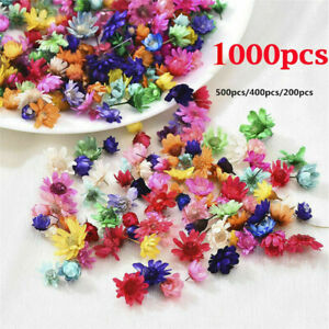 Real Dried Flowers For DIY Art Craft Epoxy Resin Candle Making Jewellery