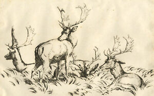 Robert Hills RA OWS, Study of a Group of Four Stags – c.1803 etching print