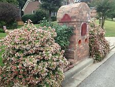 Abelia Rose Creek Qty 30 Live Plants Flowering Butterfly Attractant