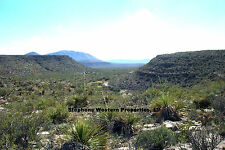40 ACRE GORGEOUS WEST TEXAS RANCH PROPERTY--EXCELLENT HUNTING HERE $250/MO-TERMS