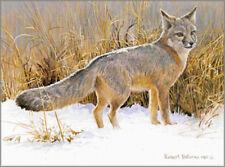Swift Fox Study  - Robert Bateman - Signed & Numbered Ltd Ed Print