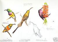 Harm AFRICAN SKETCHBOOK Birds/Mammals SIGNED COPY/80 PLATES/OUTSTANDING ART L@@K