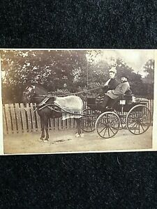 VICTORIAN CDV: COUPLE WITH THEIR HORSE & CARRIAGE, HORSE WITH TASSELLED BLANKET