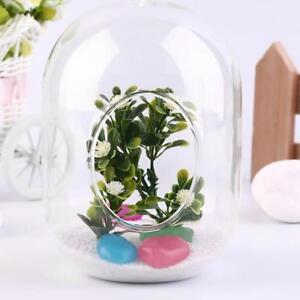 Glass Vases Transparent Hanging Terrarium Succulents Plants Holder Modern Decors