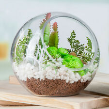 Globe Glass Ball Planter Vase Flower Plant Pot Terrarium Container Tabletop TOOP