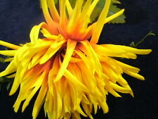 "Vintage Millinery Flower Yellow Orange 3"" Mum Dahlia ZB"