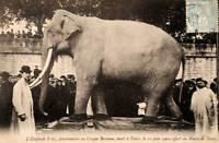 Elephant Named Fritz, Barnum Bailey Circus OLD ILLUSTRATION PHOTO