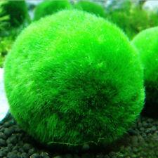 Moss Ball Live Aquarium Green Seaweed plant Fish tank Home Office Ornament