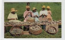 GINGER SCRAPING: Jamaica postcard (C30370)