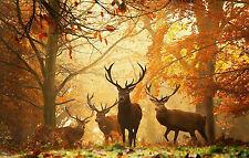 Large Framed Print - Herd of Stag / Deer at Sunrise (Animal Picture Sunset Art)