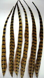 "6 NATURAL RINGNECK Grizzly Hair Extensions 15-20"" Feathers; Hats/Halloween/Craft"
